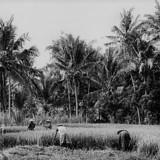 黄巾の乱に参加した当時の農民たちの状況